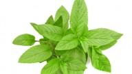 Aromaterapia, lavanda e menta contro lo stress