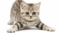 Le fusa dei gatti fanno bene alla salute
