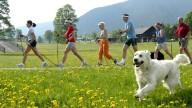 Vancanze in montagna? Provate il Nordic Walking