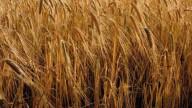 Vita più lunga e meno malattie grazie alle fibre