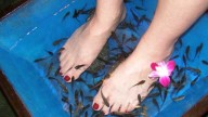 Stranezze Beauty: La Fish Pedicure!