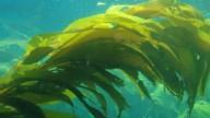 Alghe marine ottime contro l'acne