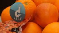 Il 31 gennaio torna l'AIRC con 'Le Arance della Salute'