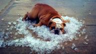 Caldo: rimedi e consigli a prova d'estate!