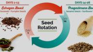 Seed rotation, quali semi mangiare a seconda del ciclo