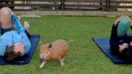 Piggy Pilates, in forma con i maialini nani