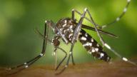 Le zanzare ci divorano? Ecco i rimedi più utili